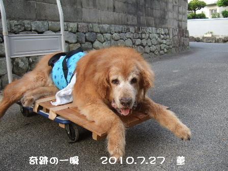 奇跡の一瞬  2010.7.27 菫.JPG