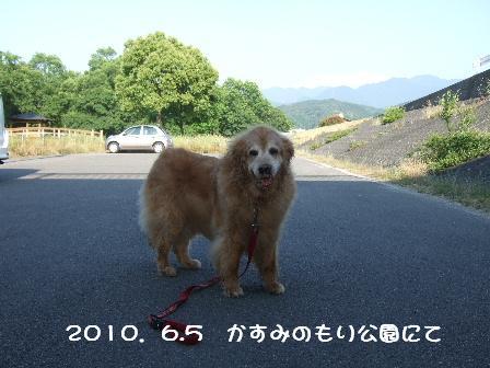 2010.6.5菫.JPG