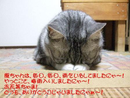 風ちゃん4.JPG