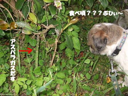 陸ちゃんとアスパラガス.JPG