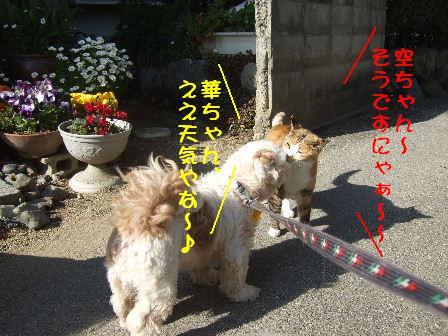 華ちゃん&空ちゃん.JPG