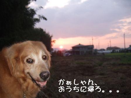 夕焼け1.JPG