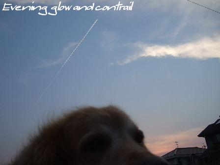 Evening glow and contrail1.JPG