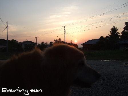 Evening sun.JPG