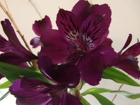 2010年のお花3.jpg