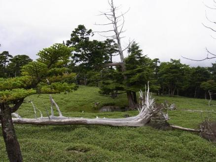 20100808大台ケ原0285.JPG