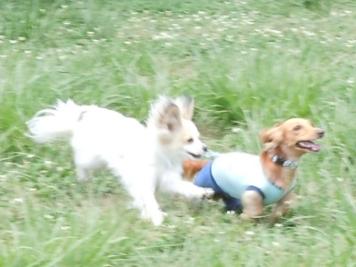 水元公園 ドッグラン 2010-6-24