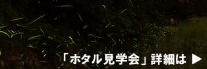 ホタル.jpg