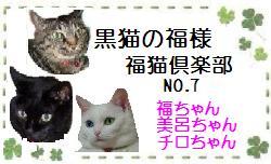 fukunekooo7