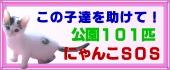 middle_1157639196.jpg