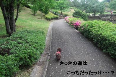 2006_0514母の日0031 (2).JPG