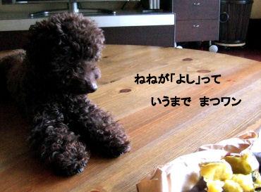 2006_04150011 (2).jpg