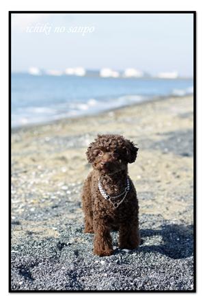 冬海3.jpg