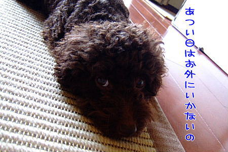 2007_0830夏休み0024a.JPG