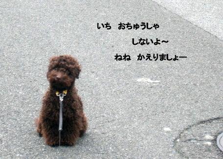 2006_05100008 (2).JPG