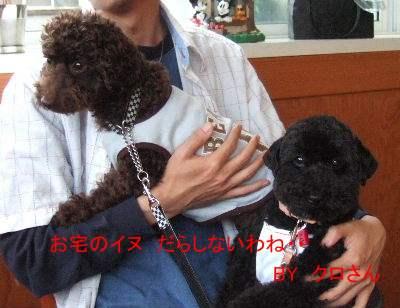 2006_0611クロさんと0029b.JPG
