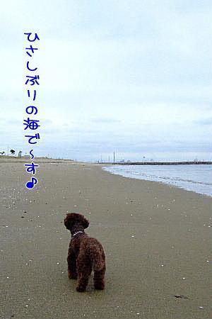 2007_0830夏休み0053a.JPG