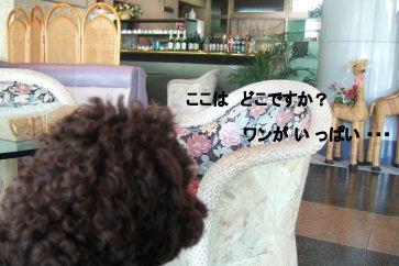 2006_0521すいらん0001 (2).JPG