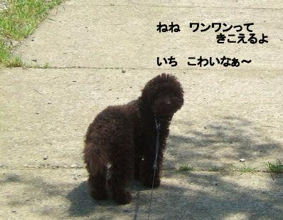 2006_0521すいらん0004 (2).JPG