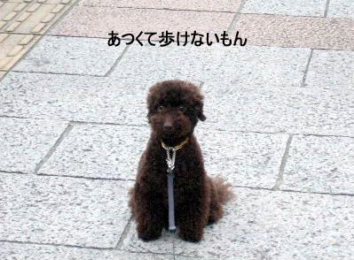 2006_07090036a コピー.JPG