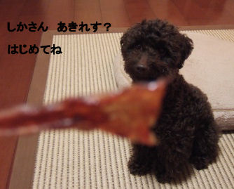 2006_0429IKEYA・pet博0032 (3).jpg