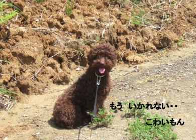 2006_0521すいらん0005 (2).JPG