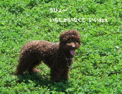 2006_0521すいらん0007 (2).JPG