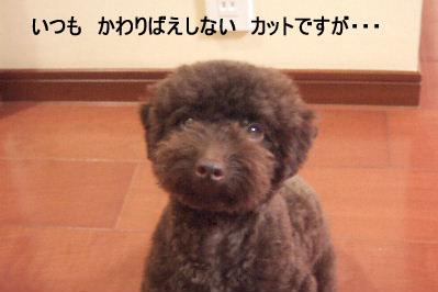 2006_07090021 コピー.JPG