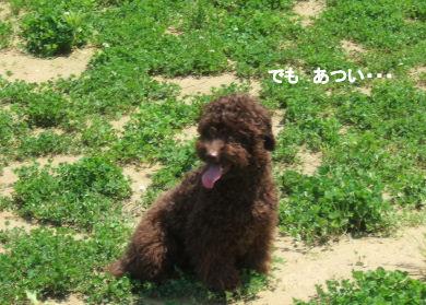 2006_0521すいらん0009 (2).JPG