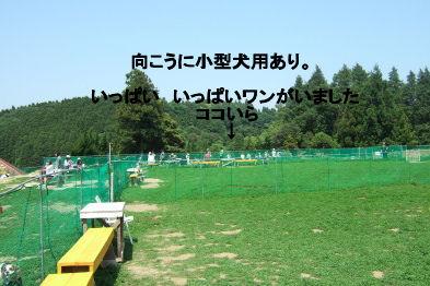2006_0521すいらん0011 (2).JPG