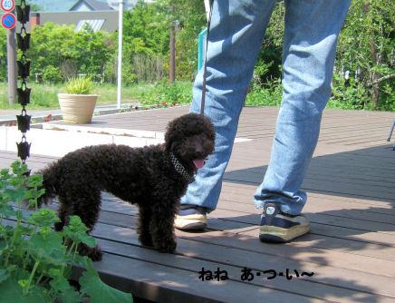 2006_0601山中湖0030A.jpg