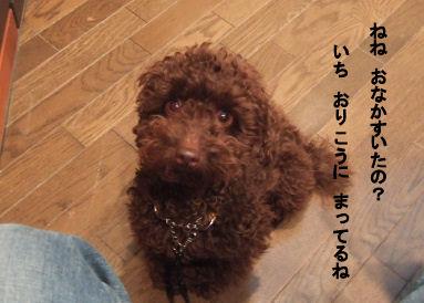 2006_0521すいらん0019 (2).JPG