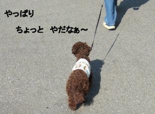 2006_0504pet博(再)0031 (2).JPG