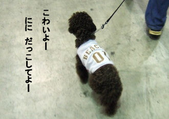 2006_0504pet博(再)0033 (2).JPG