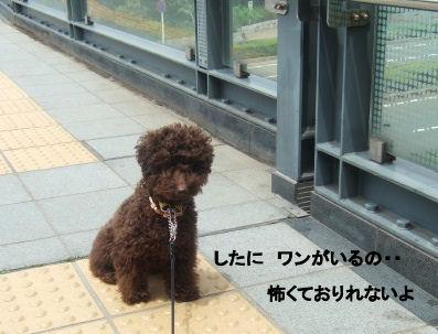 2006_0507pet博(再2)HS0015 (2).JPG