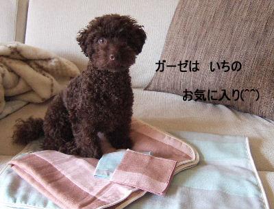 2006_0611クロさんと0005a コピー.JPG