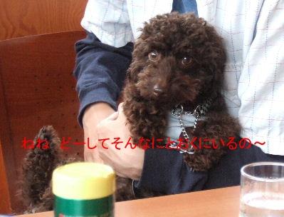 2006_0611クロさんと0024c.JPG