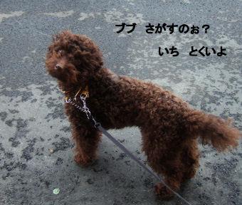 2006_0507pet博(再2)HS0025 (2).JPG