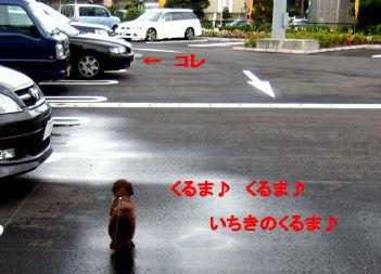 2006_0507pet博(再2)HS0027 (2).JPG