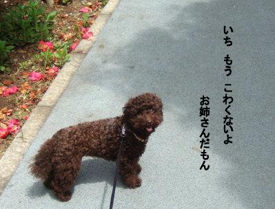2006_0507pet博(再2)HS0014 (2).JPG