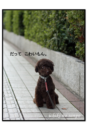 散歩嫌い.jpg