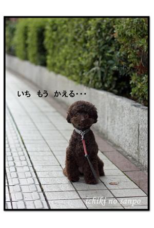 散歩嫌い1.jpg