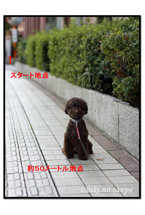 散歩嫌い2.jpg