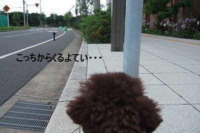 2006_0717早朝散歩0003 コピー.JPG