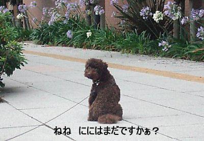 2006_0717早朝散歩0001a コピー.JPG
