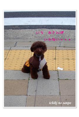 夏散歩1.jpg