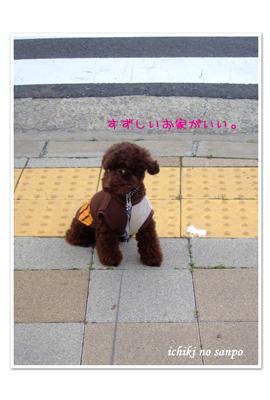 夏散歩2.jpg
