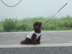 2006_0809車山旅行0051a.JPG