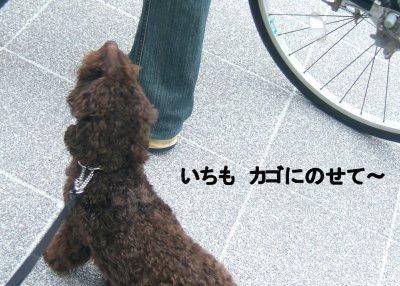 2006_0717早朝散歩0007a.JPG