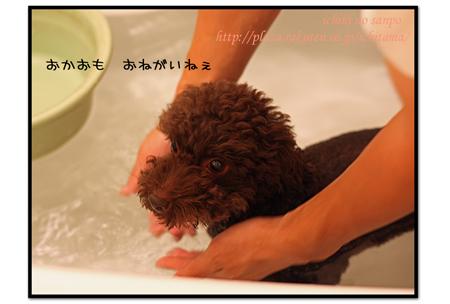 にんにく風呂2.jpg